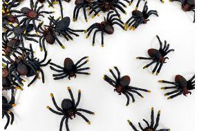 spinnen 1